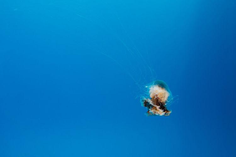 Close-Up Of Jellyfish Undersea