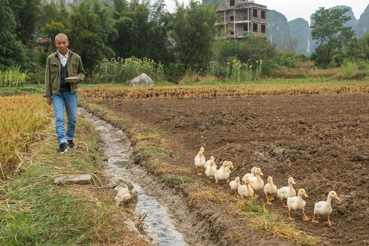 Getting ready to feed the ducklings in Yangshuo China Streetphotography China Yangshuo Travel People One Person Full Length Casual Clothing Real People Farm Domestic Animals Lifestyles Farm Worker