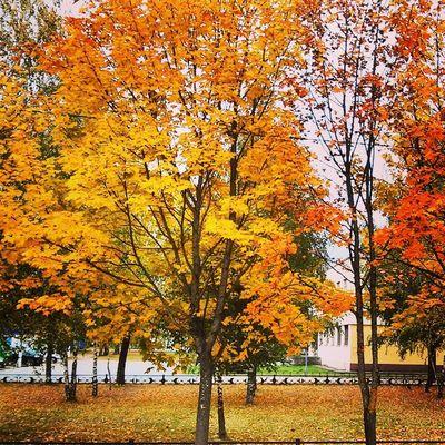 Какая золотая осень..) Autumn Nature Vscobest Vscolovers vscocam vscostyle vscogood vsco today trees town outside photo sun good yellow weather