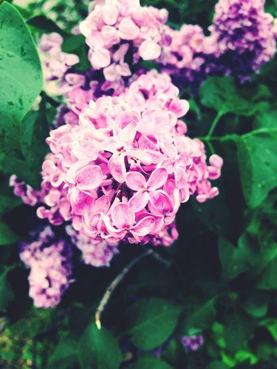 Flowers Hello World Nature Lover 🌺🌸💐