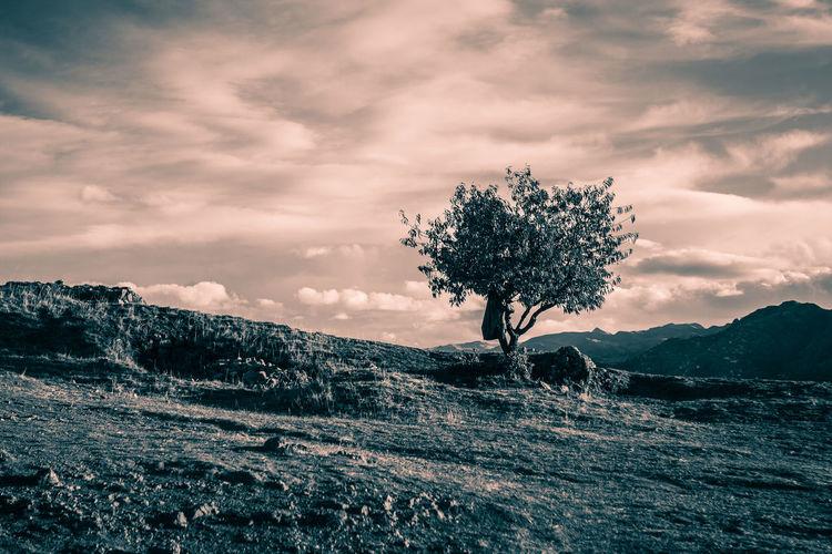 Tree on landscape against sky during sunset