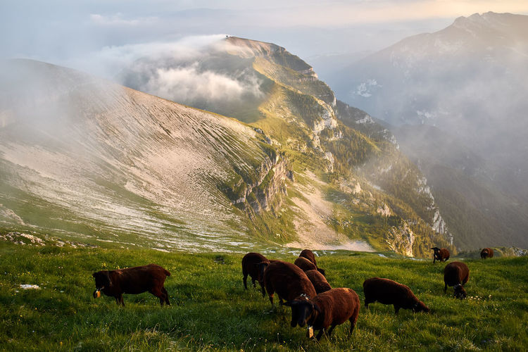 Sheep grazing on mountain