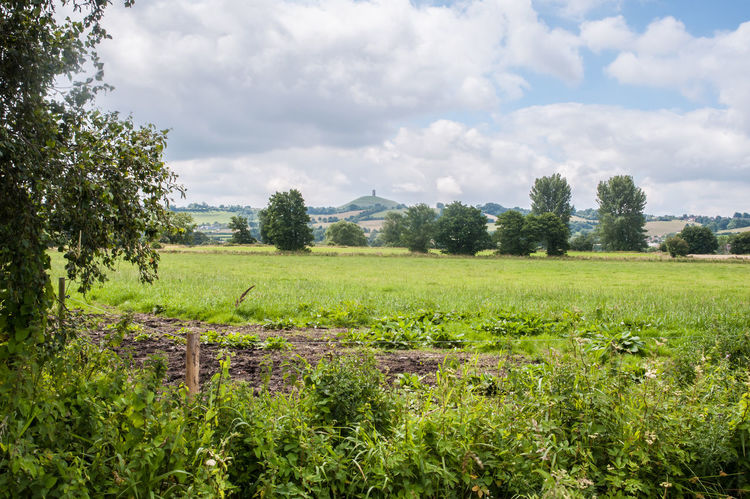 View of Glastonbury Tor Agriculture Beauty In Nature Cloud - Sky Day Field Glastonbury Tor Grass Green Color Growth Landscape Nature No People Outdoors Rural Scene Scenics Sky Tor Tranquil Scene Tranquility Tree