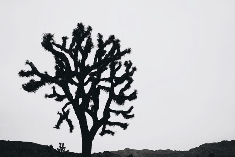 Edge Of The World Joshua Tree National Park Desert Gypsy Mothernature Yucca California Organsinsleep Laurenluck Blackandwhite 35mm Succulents