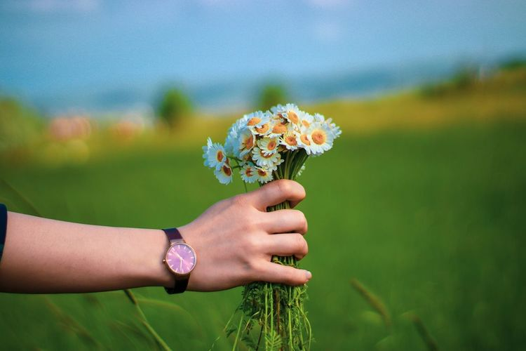 Close-up of human hand holding flowers on field