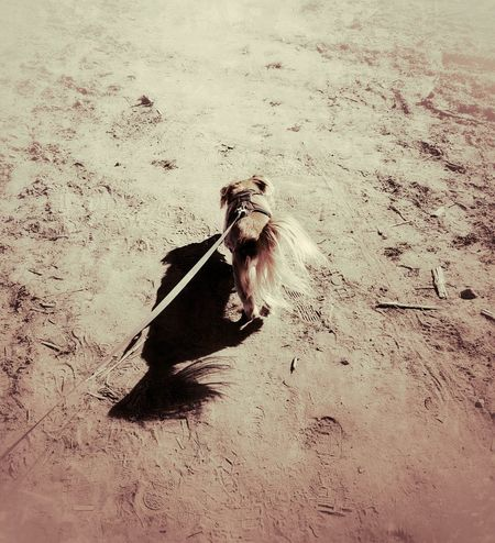 Animal Themes Animals In The Wild AntiM Beach Bird Day Desert Landscape Dogs Of EyeEm Dogslife Mammal Nature No People One Animal Outdoors Sand Sandy Shadow Solitude SweetSally Water