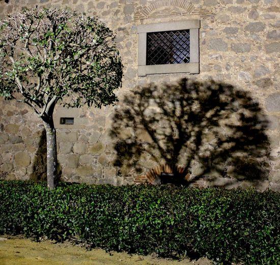 Green Grill Night Shadows Outdoors Stone Wall Stones Tree Wall Window