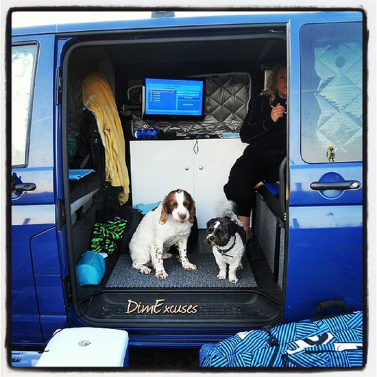 Two dogs, one van. Newgale Pembrokeshire VW