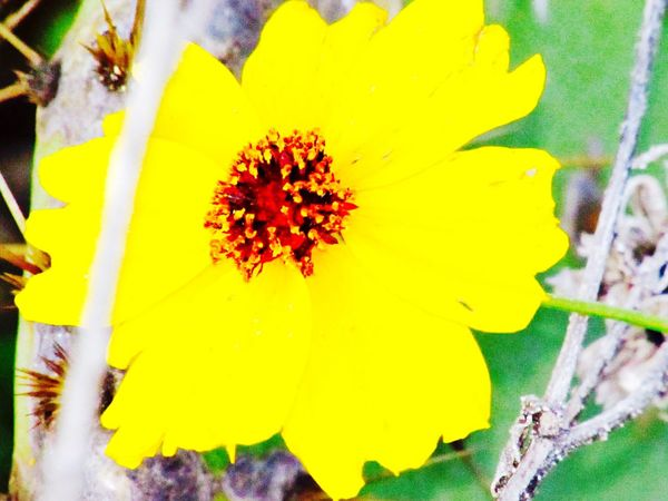 Catus Flower Taking Photos Waterfront Rockport Texas Fulton