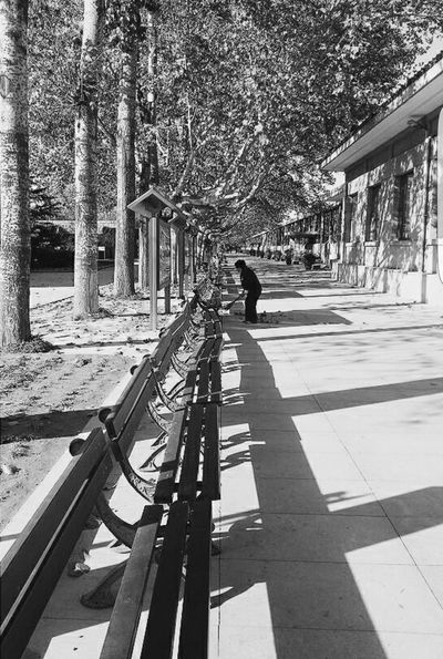 Solitude Solitude Peace Minimalistic Simplicity Shadows Cleaner Alignment Park Benches Trees Black And White Photography Old Age People Tranquility Emptiness Black And White Collection  B&w Street Photography Street Photography Samsung Note 3