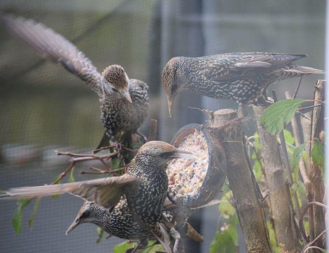 Flock of birds perching on tree