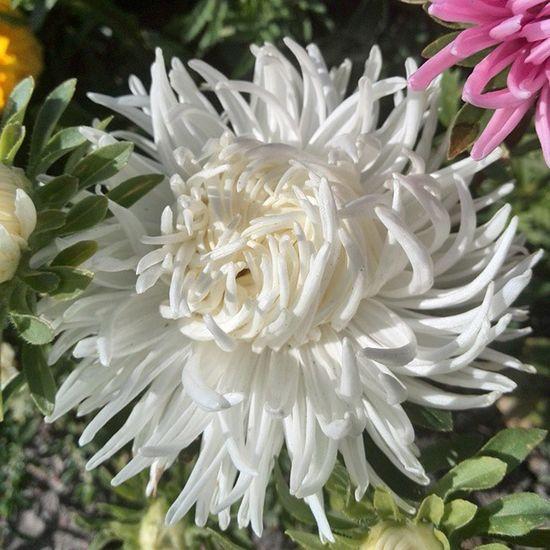.48. Не знаю что как и за чем,но мне нравятся цветы.... Flower Macro Chillsnotskills