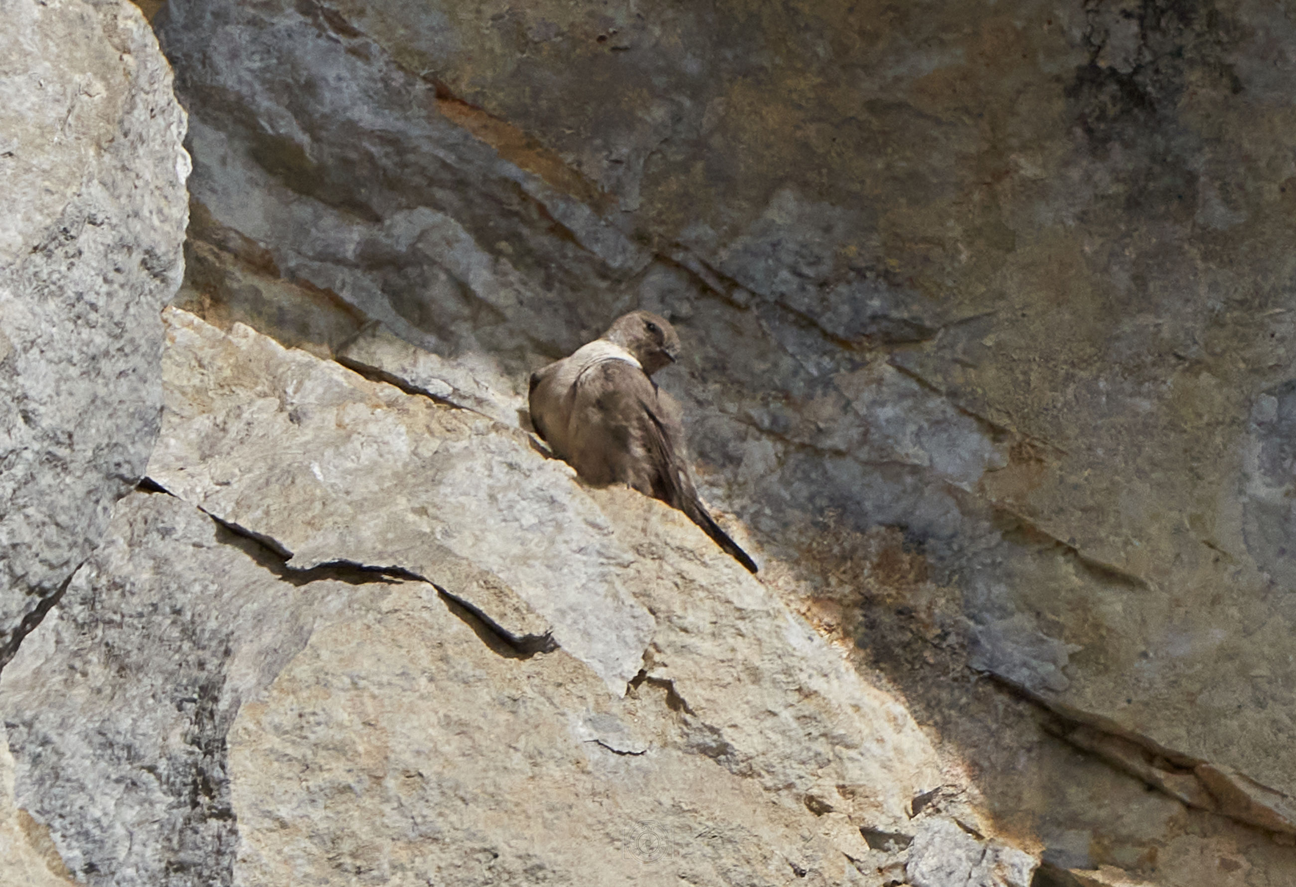 animal themes, animal, rock, wildlife, animal wildlife, bird, one animal, no people, nature, day, outdoors, rock formation, geology, perching, bird of prey, textured, wall, mammal