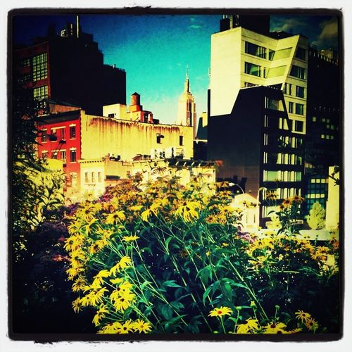 highline blooming Nature_collections  EyeEm Nature Lover Highline EyeEm Best Shots - Nature