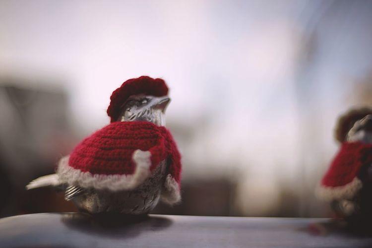 スズメのサンタ( ´ ▽ ` ) Sparrow Santa Snapshot Taking Photos Walking Around Streetphotography Enjoying Life EyeEm Best Edits EyeEm Best Shots