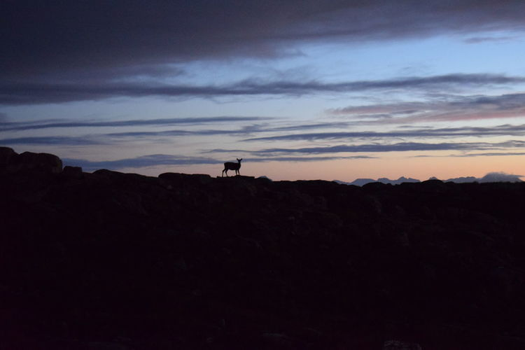 Animal Themes Beauty In Nature Beinn Bhan Cloud - Sky Day Deer Doe Female Highland Landscape Mammal Mountain Mountains And Sky Nature Nature No People Outdoors Scenics Scotland Silhouette Sky Strathcarron Sunset Tranquility Travel Destinations