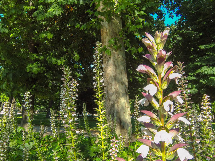 Close-up of flowering plants against trees in park