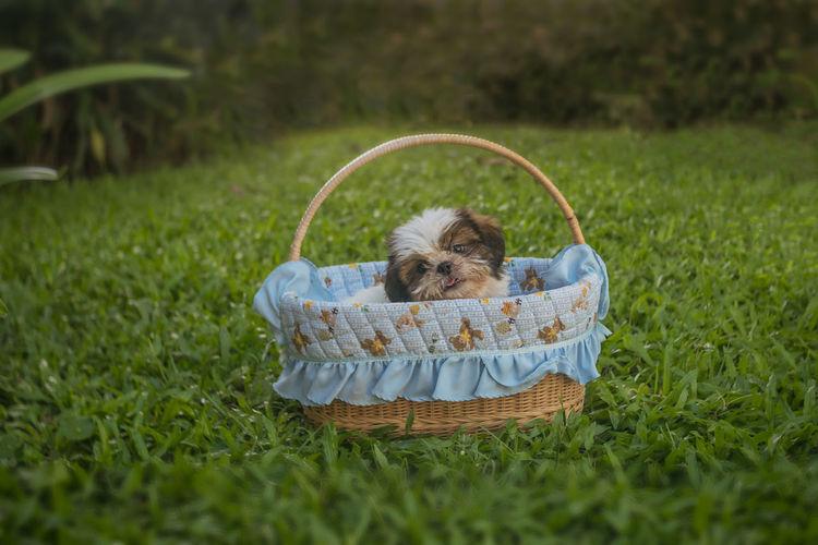 Girl lying in basket on field