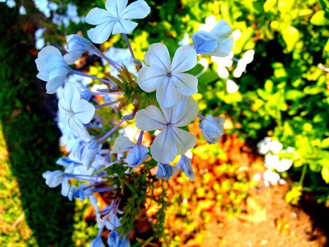 Flowers,Plants & Garden Nature Natural Beauty First Eyeem Photo