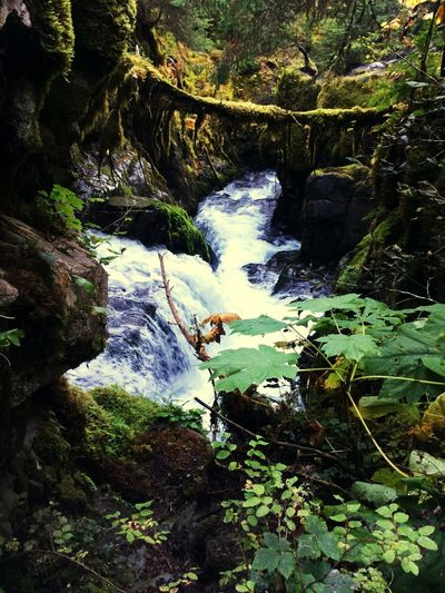 I had an awesome tour guide show me around Anchorage Alaska. Waterfall Green Beauty In Nature Forest