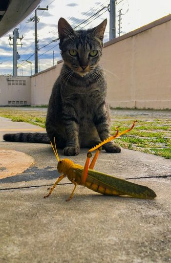 Cat Animal Themes One Animal Animal Pets Domestic Vertebrate Domestic Animals