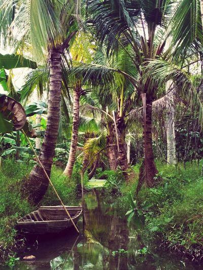 Mekong-delta Vietnamphotography Mekong-delta Palm Tree Mekong Mekong Delta River Boat Canal