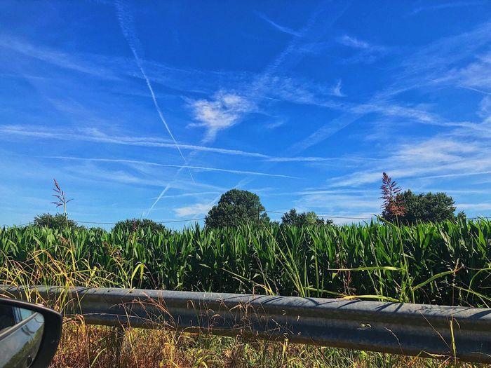 XO Plant Sky