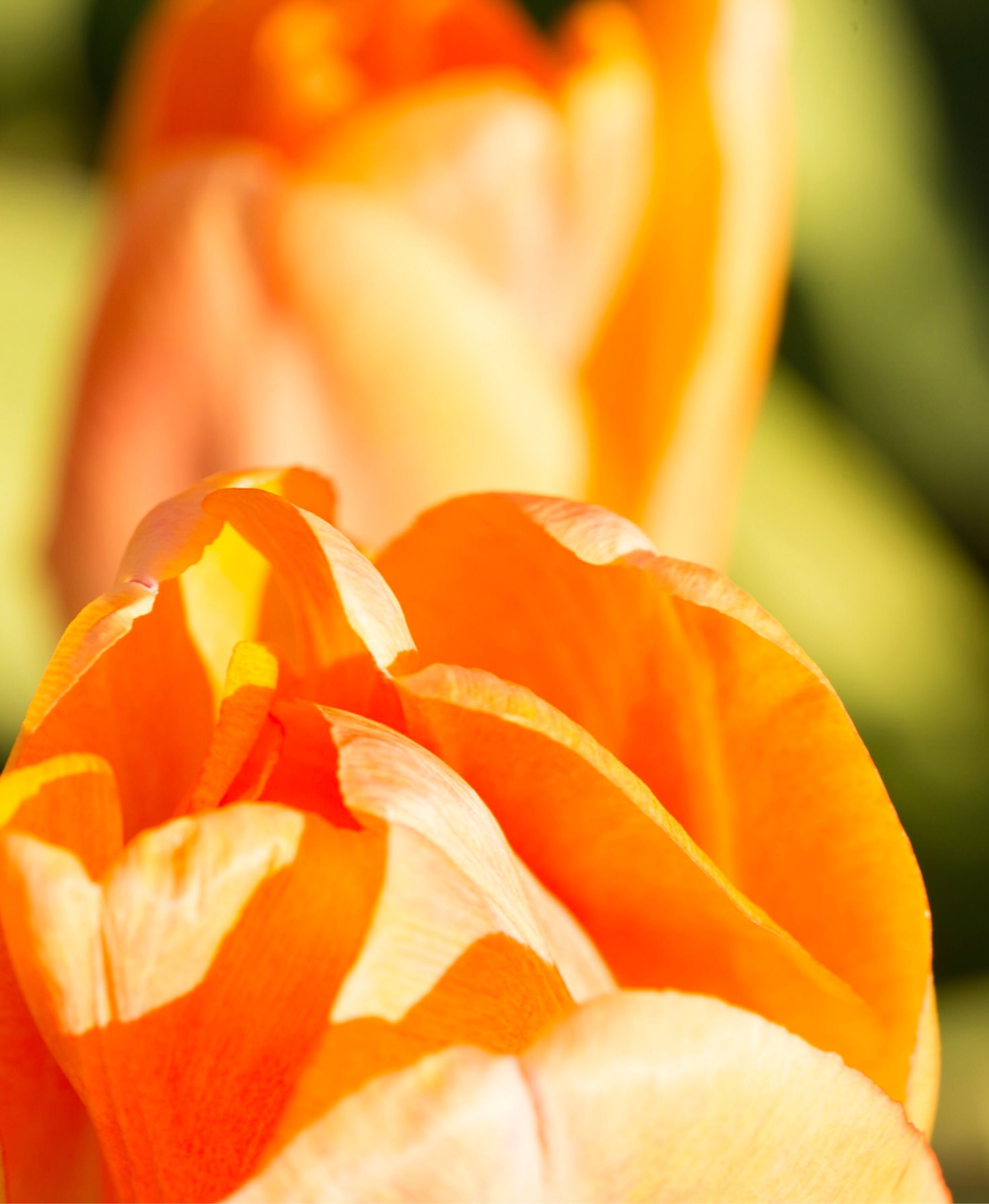 flower, fragility, beauty in nature, close-up, nature, freshness, orange color, petal, flower head, growth, no people, outdoors, day