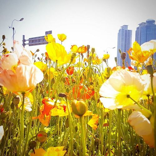 Photography Photographer 부산 Busan Spring Flower 일상 데일리 감성 감성사진 사진 여행 일상공유 미러리스 Sotong Camera Follow Followme Photo Travel Daily Southkorea