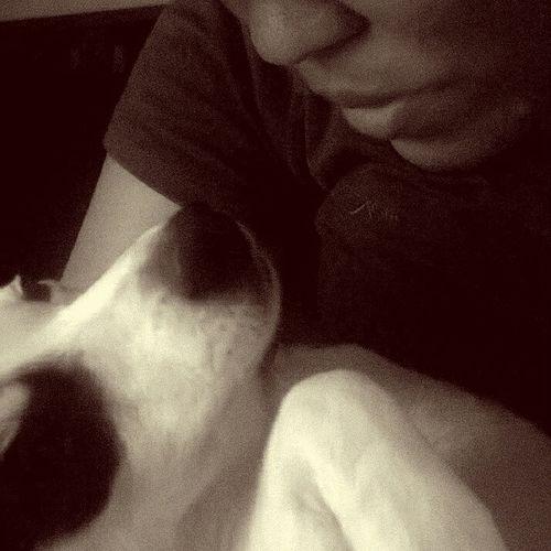 Ilovemydog Puppy Love Black And White Crossbreed MommysGirl Dog Love Dogslife My Pet