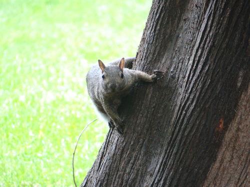 Squirrel Walking Around Taking Photos