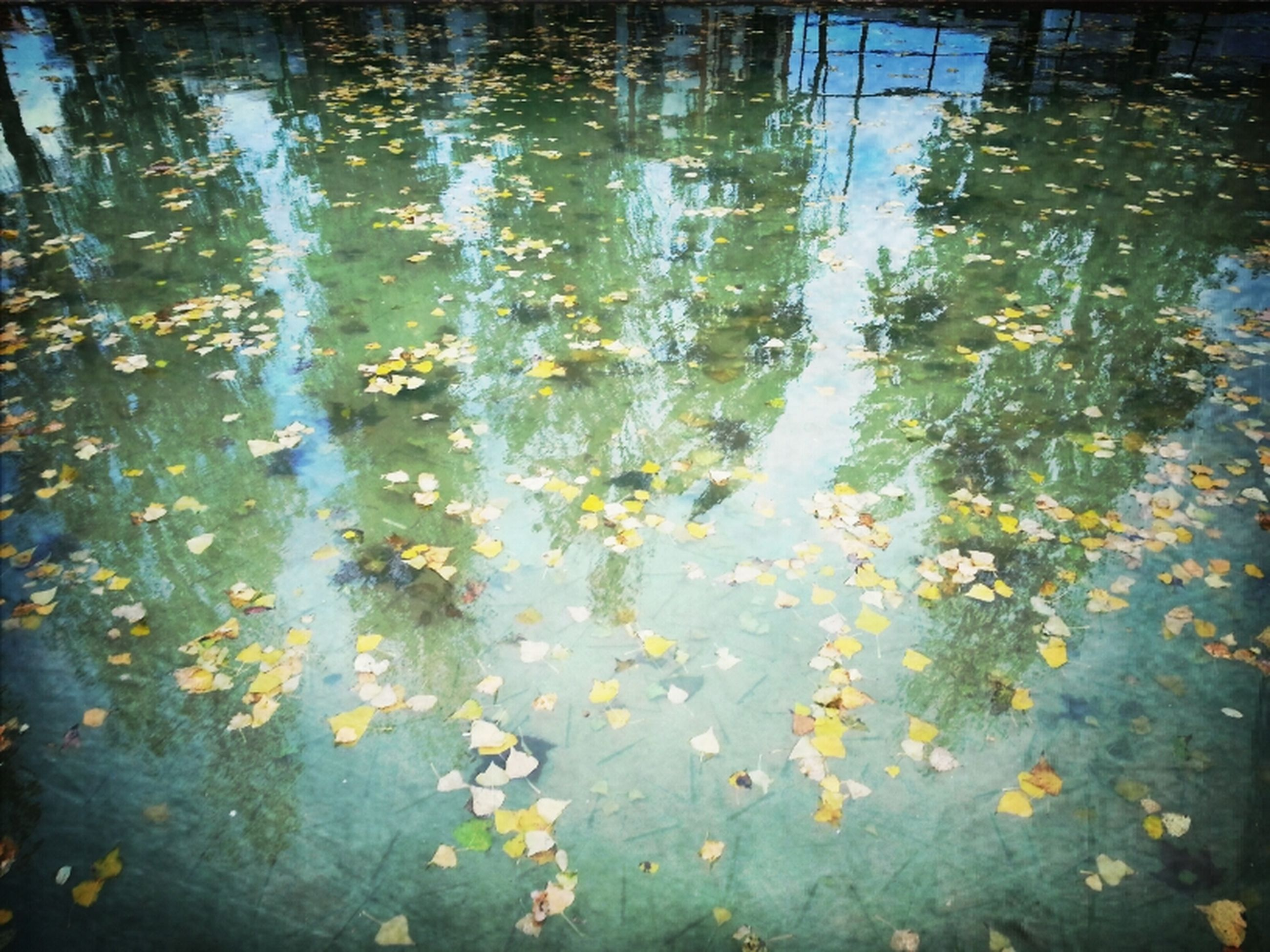 water, reflection, high angle view, lake, pond, nature, leaf, floating on water, animal themes, tranquility, day, beauty in nature, plant, outdoors, waterfront, swimming, no people, puddle, wet, growth