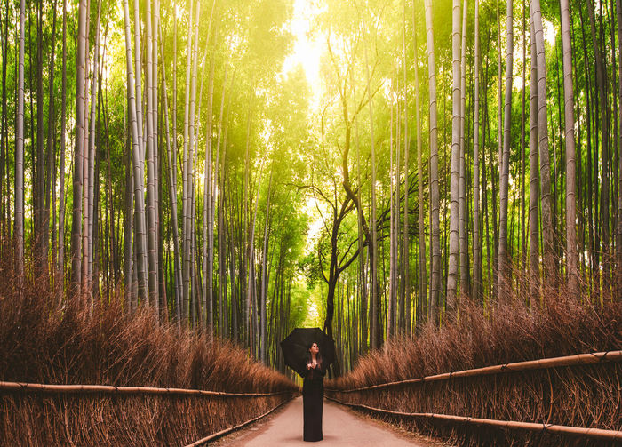 Woman on walkway amidst bamboo plants in forest