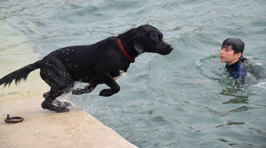 The take off... Dog Pets Animal Themes Playing Domestic Animals One Animal Mammal Day Water Outdoors Sea One Person Nature People Cornwall Uk Sea Swimming St Mawes Harbour Black Labrador Kernow
