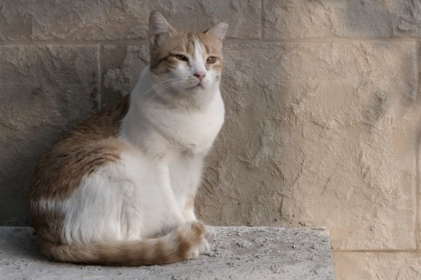 City Life Street Photography Domestic Cat Mammal Cat Domestic Domestic Animals Pets Feline One Animal No People Wall - Building Feature Sitting Looking Close-up