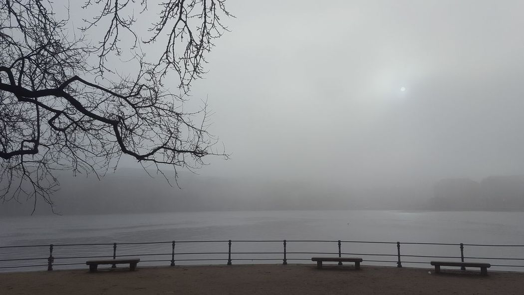 Alster Germany🇩🇪 Hamburg Hamburg City January January 2018 Winter Winter Fog Beauty In Nature Day Foggy Foggy Day Germany Lake Lake View Mystical Atmosphere Nature No People Outdoors Peaceful Peaceful And Quiet Silence Of Nature Tranquil Scene Tranquility Scenics Fog Water Bare Tree Tree Branch
