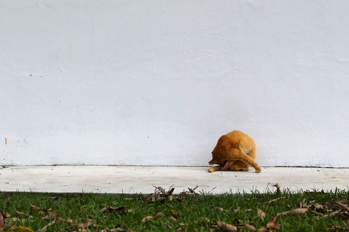 Cat Day Grass Green Orange Cat Outdoors Solitude Stray Animal Stray Cat Tiong Bahru