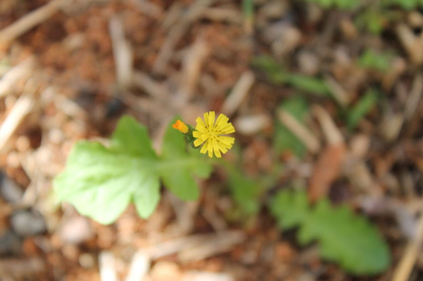 Beginnings Blooming Botany Change Close-up Day Flower Flower Head Focus On Foreground Fragility Freshness Growing Growth Leaf Nature New Life No People Petal Plant Yellow