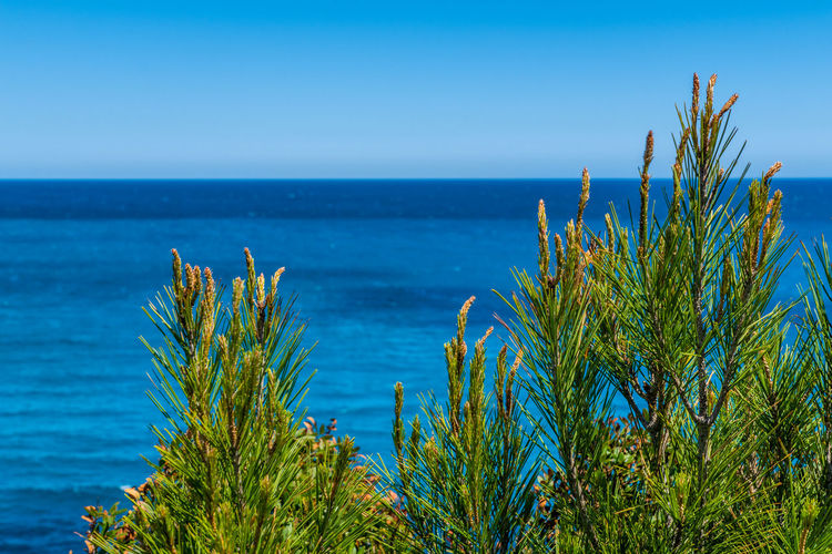 Plants growing by sea against clear blue sky