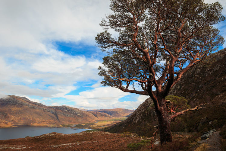 Scenic view of pine tree in mountains against sky. - Scotland, 2016 Sky Beauty In Nature Mountain Scenics - Nature Cloud - Sky Tranquility Tree Tranquil Scene Plant Nature Landscape Non-urban Scene No People Day Environment Land Outdoors Mountain Range Travel Destinations Idyllic Formation Lake Loch Maree Wilderness Mountain Peak Purity Remote Remote Location Escape Exploring Hiking Travel Scotland Scottish Highlands Pine Tree Mountain View The Great Outdoors - 2019 EyeEm Awards