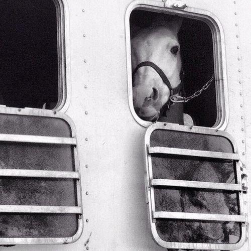 Horses Horse Trailer