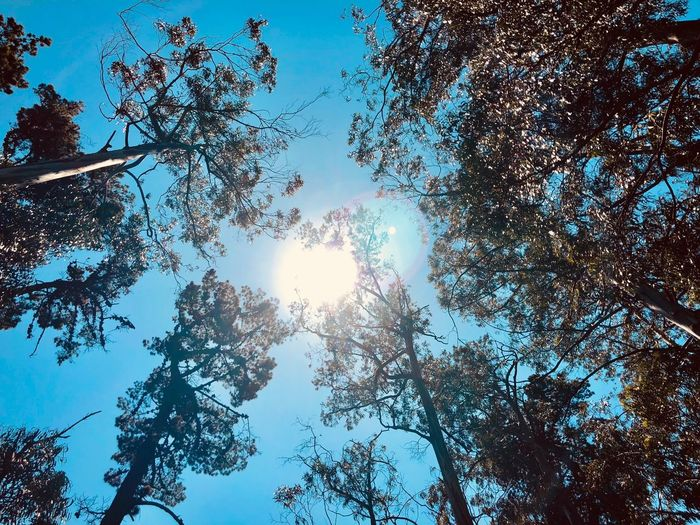 Lost Sun Tree Sunbeam Sunlight Low Angle View Nature Branch Lens Flare Beauty In Nature Growth Blue Sky Day Outdoors No People Tranquility Clear Sky