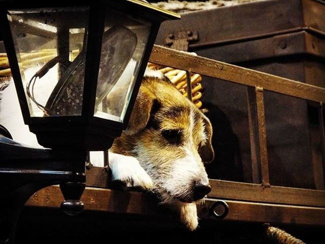 Sad pup😕 Dog Dogpic Dogpics Sad Saddog Animal Animals Campervan Rooftop Tattooconvention Tattooshow