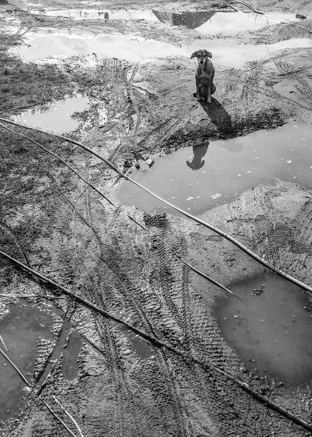 After Rain Beauty In Nature Blackandwhite Camping Close-up Day Dog Mud Nature One Person Outdoors People Pets Puddle Scenics Sky Tree Vacations Water Lines Black And White Animal Portrait