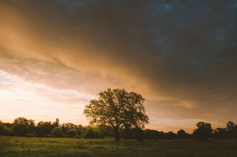 Beauty In Nature Cloud - Sky Clouds Day Field Grass Idyllic Landscape Mood Nature No People Orange Color Outdoors Scenics Sky Sun Sunrise Sunrise_sunsets_aroundworld Sunset Tranquil Scene Tranquility Tree Tree