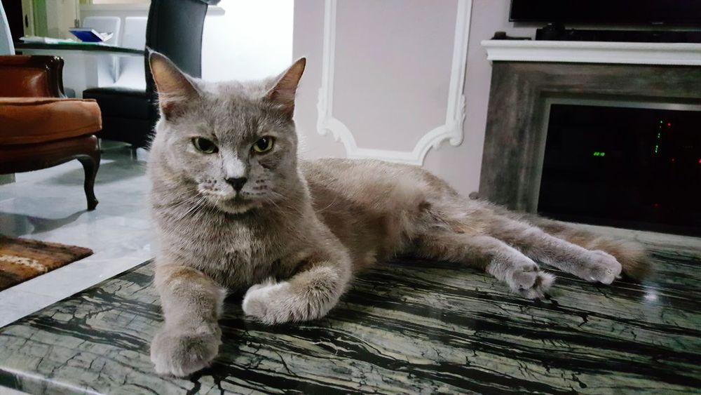 Cats Taking Photos Posing Animal Posing Cuteness Pets