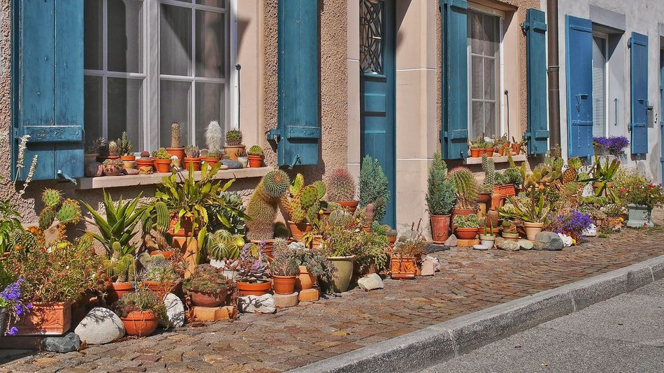 Street Garden with Cactus in Prangins Switzerland Lake Geneva Schweiz Gardening Flowers,Plants & Garden Streetphoto_color Streetlife Pastel Power