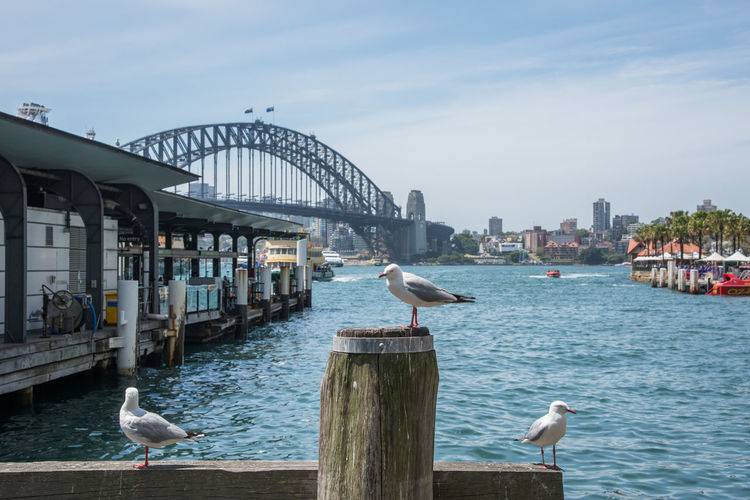 Seagulls Perching On Railing By River In City