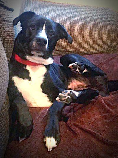 My dog Gordon Pets Dog Animal Themes Animal Merp Cutedog New On Eyeem