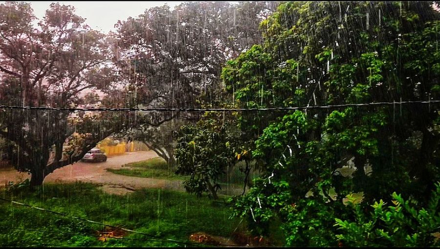Rain Rain Go Away...Come Again Another Day🌧⛈🌧⛈ Rain Beautiful Nature Rainy Days Plant Tree Growth Nature Green Color Tranquility Beauty In Nature Lake Fence Forest Scenics - Nature Land Outdoors No People Tranquil Scene Water Day Non-urban Scene Idyllic Summer In The City